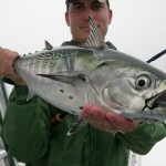 False Albacore on the fly
