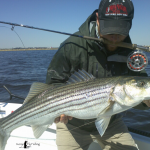 Jamaica Bay Striped Bass
