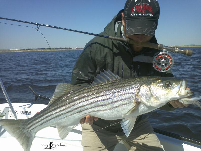 Jamaica Bay Striped Bass