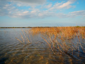 red fish wetlands