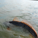 redfish, fly fishing, texas, coast, bend, port aransas, corpus christi