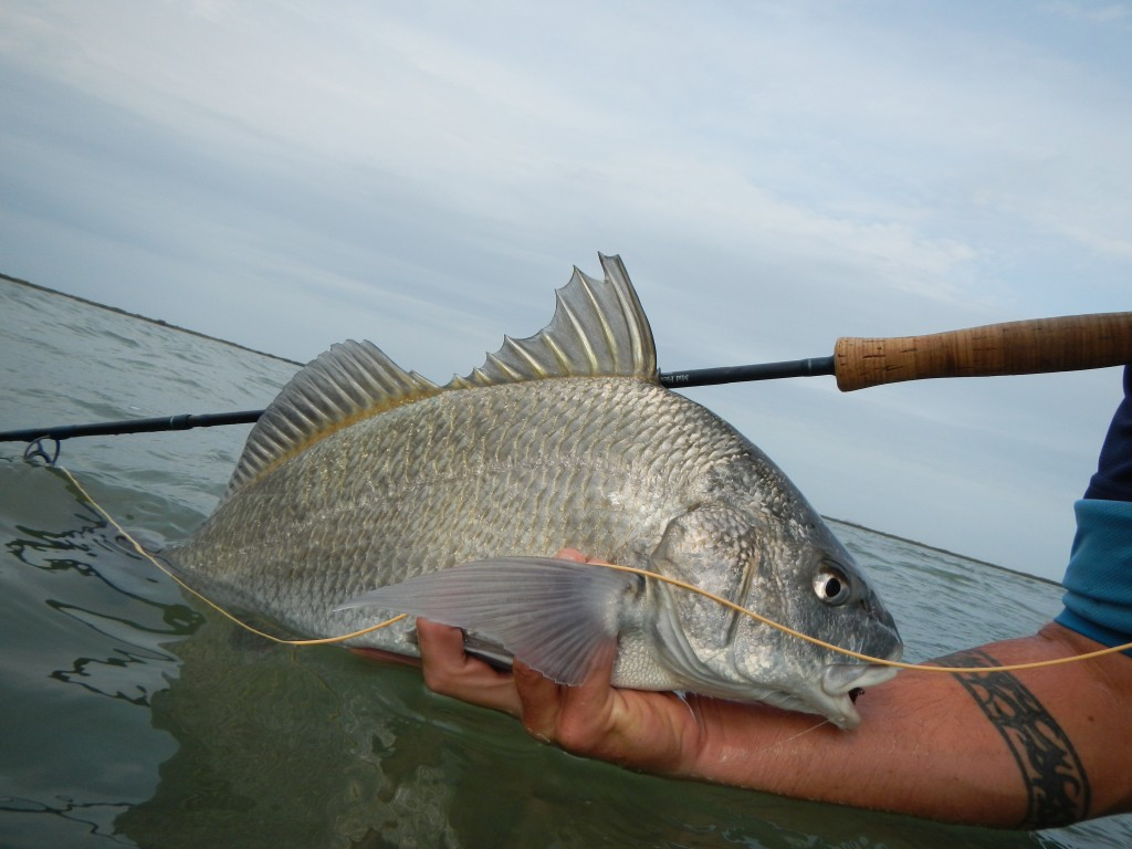 Black drum kenjo fly fishing charters for Fishing calendar texas