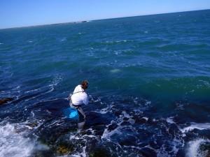 jack attack, sea habit fly, port aransas south jetty
