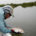 redfish, red drum, fly fishing, texas, port aransas
