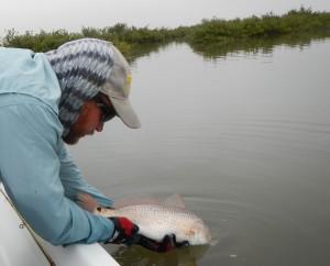 redfish, red drum, fly fishing, texas, port aransas