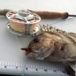 fly fishing, texas, gulf, coast, port aransas,