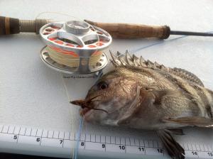 fly fishing, texas, gulf, coast, port aransas,
