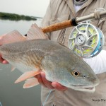 lighthouse, lakes, paddling, kayaking, trail, fly fishing, charter, guide