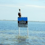 protected, seagrass, Pelican, saltwater, flyfishing, flats