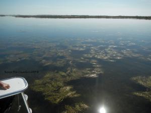 redfish, sea, grass, fly fishing, port aransas
