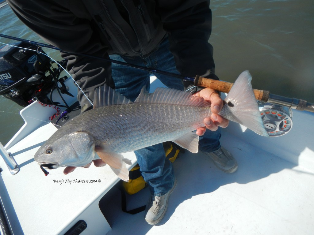 redfish, fly fishing, port aransas, corpus christi, saltwater, flats