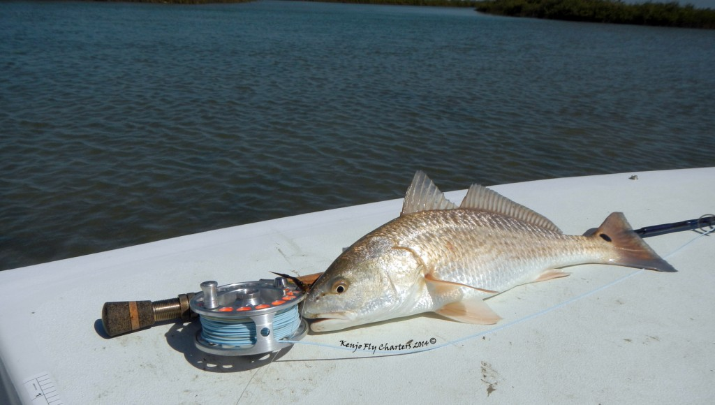 saltwater, fly fishing, texas, coast, guide