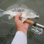 redfish, fly fishing,