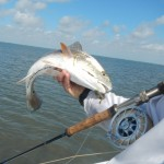 red, fish, port aransas, guide, saltwater