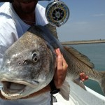 black drum, fly fishing, port aransas, guide