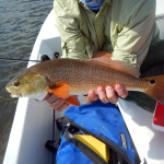 redfish, fall, season, fly fishing, port aransas, corpus christi