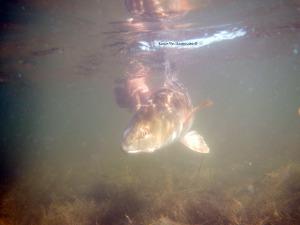 redfishing, catch, release, fly fishing, texas, gulf, coast, guide