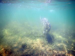 redfish, fly fishing, texas, coast, flats, guide
