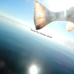 redfish, guide, fly fishing, tailsup,