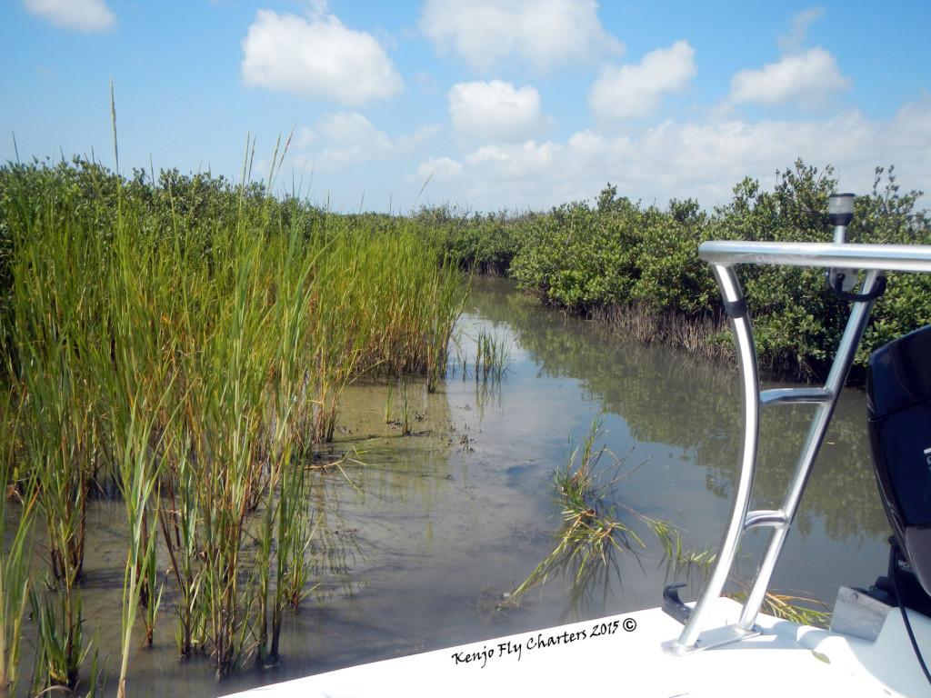 slough, creek, redfish, texas, port aransas