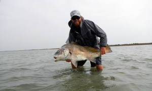 black drum, texas, coast, fly fishing, guide