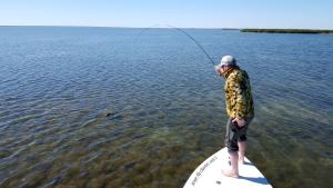 redfish, skinny, flats, guide, fishing, fly, saltwater, coast, texas, port aransas