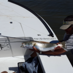 gator, trout, fly fishing, port, aransas, redfish, speckled, flats, guide, saltwater, black drum, redfish, mullet, flies