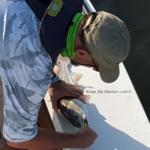 fly fishing, redfish, speckled trout, trophy, beavertail, strike, first cast, port aransas, saltwater, guide, charter, aransas, pass, rockport, shrimp fly, corpus christi
