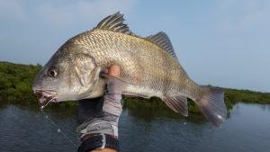 fly fishing, black drum, redfish, guide, port aransas, rockport, corpus christi