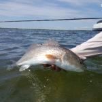 Fly fishing redfish port aransas