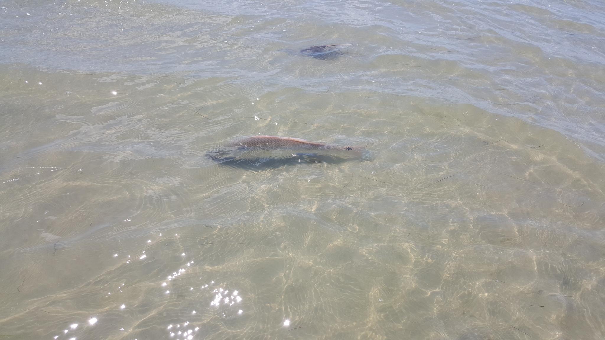 Galveston Offs Fishing Chartes Texas Houston Deep Sea Trips Port Charter Bluefish