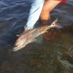 redfish drum fly fishing port aransas