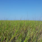 cord grass port aransas texas gulf coast fly fishing