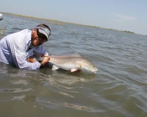 Bull red in the Texas Marsh. Port Aransas Texas Fall Run