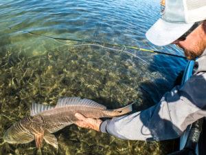texas, gulf, redfish, coast, fly fishing, port aransas, rockport, corpus christi, laguna madre, tailing