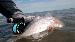 red drum, fly fishing, port, aransas, texas, coast, rockport, corpus christi, redfish, spottail, tail, sight, casting, mangroves, spartina, cord, grass, spring