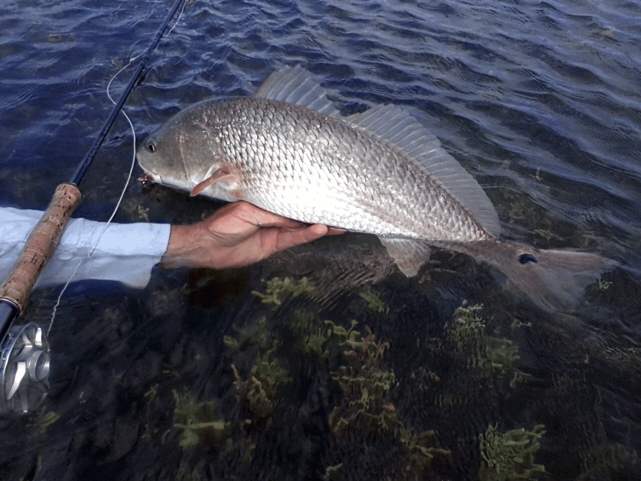 South texas fly fishing reports kenjo fly fishing charters for Corpus christi fishing report